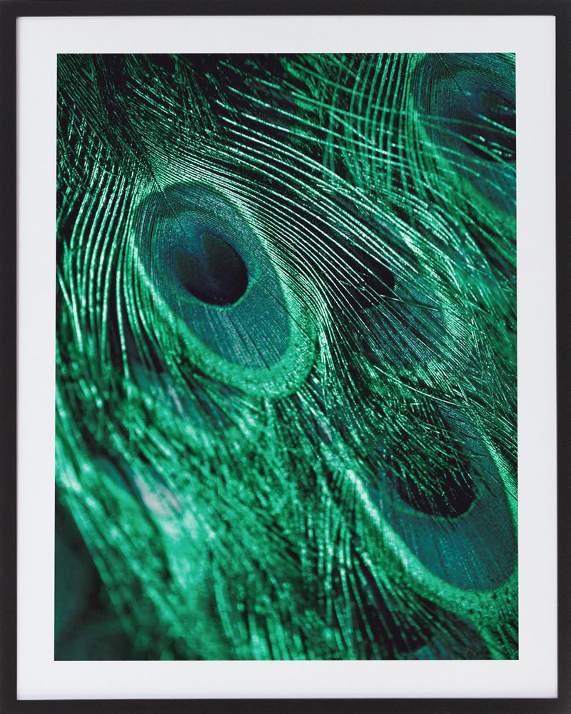 Emerald Feathers 3 Framed Photographic Print