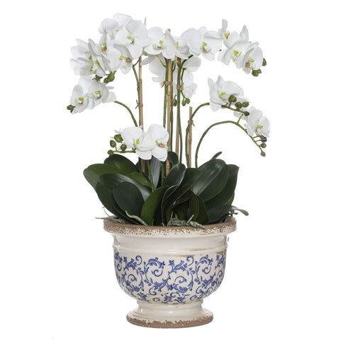 Phalaenopsis in Fleur Footed Bowl