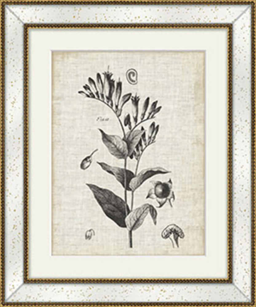 Gold Flower Print II With Antique Frame