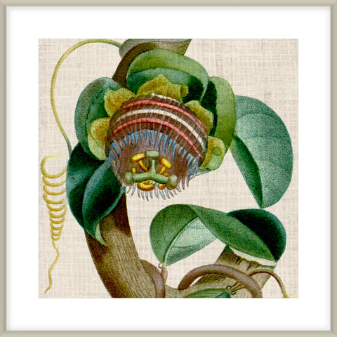 Cropped Turpin Tropicals V Framed Print