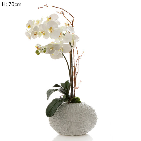 Phalaenopsis in White Shell Vase White