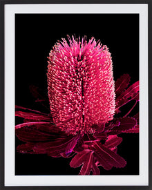 Incarnadine III Framed Photographic Print
