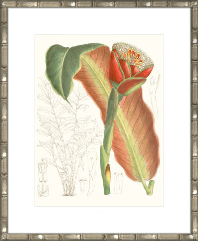 Tropical Variety VIII Framed Print