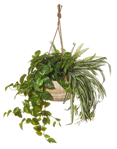 Boston Fern in Dansk Hanging Bowl