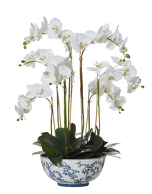 Deluxe Phalaenopsis in Aaliyah Bowl White Large