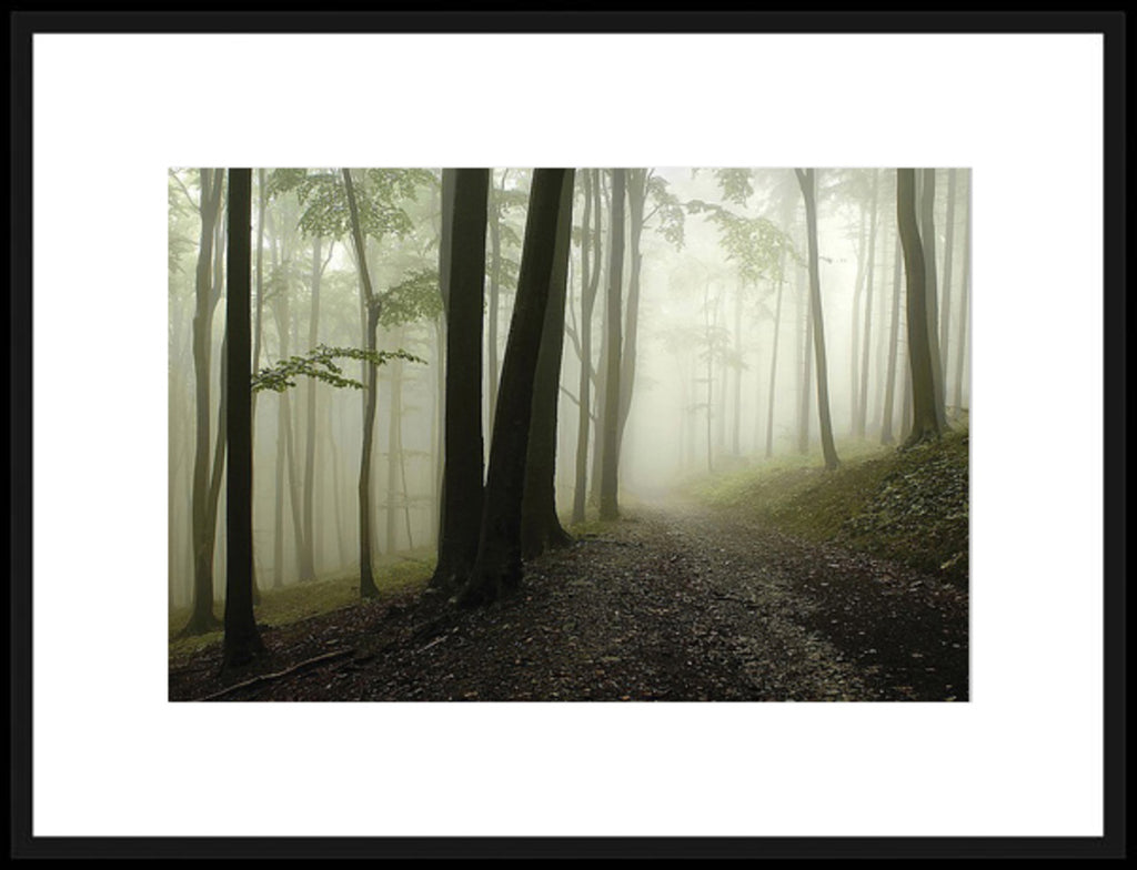 Green Woods I Framed Photographic Print