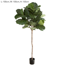 Fiddle Leaf Tree 150cm