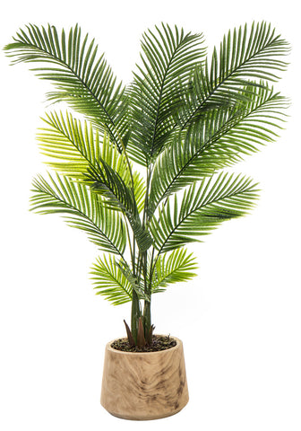 Areca Palm in Dansk Pot Large