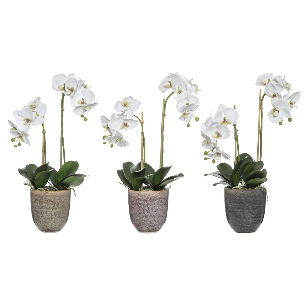 Deluxe Phalaenopsis in Ulani Pot Set/3 Assorted