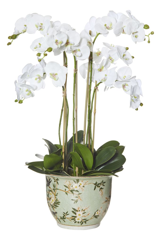 Phalaenopsis in Delilah Pot White