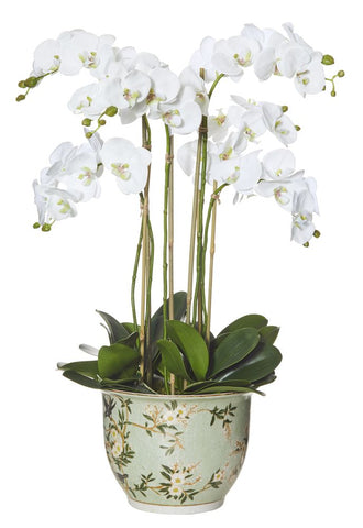 Phalaenopsis in Delilah Pot White 88cmH
