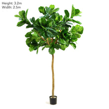 Fiddle Leaf Giant Tree 3.2m