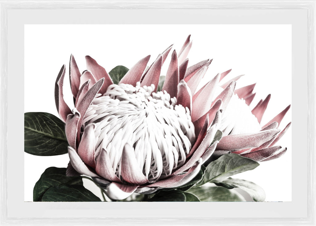King Protea Photographic Print with Frame