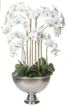 Deluxe Phalaenopsis in Ellison Bucket White