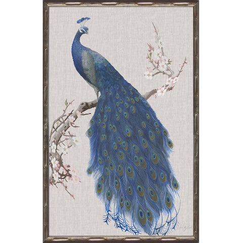 Peacock II Framed Print