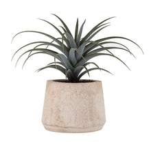 Airplant in Dansk Pot