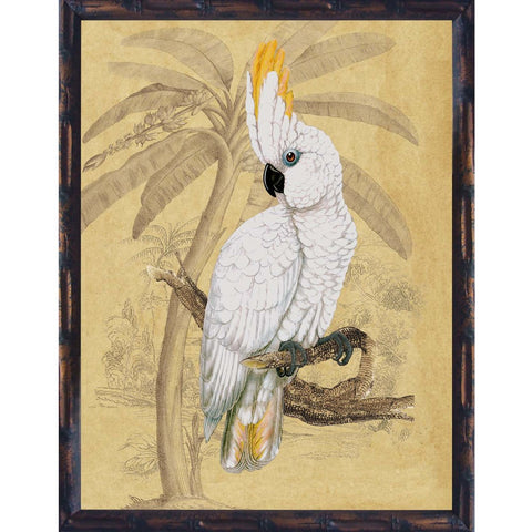 Sulphur Crested Cockatoo I Framed Print