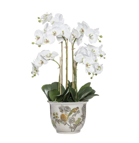 Phalaenopsis in Lucia Round Pot 73cm