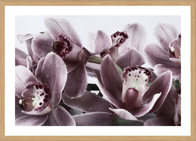 Pink Orchids Photographic Print with Frame