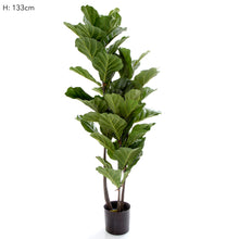 Fiddle Leaf Tree 133cm