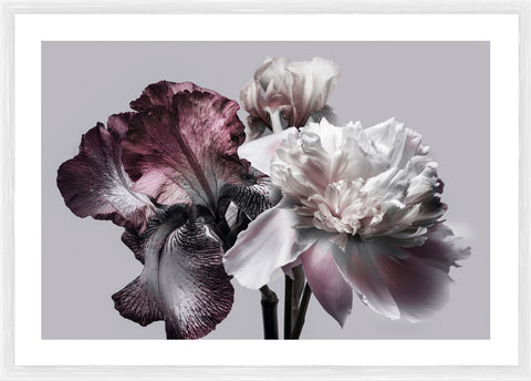 Golden Peonies Photographic Framed Print