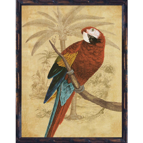 Parrot Red Macaw Framed Print