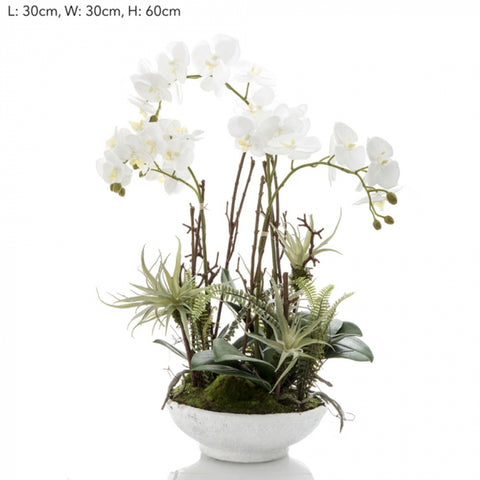Orchid and Fern In Pot
