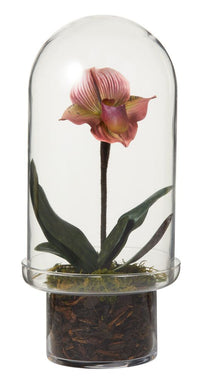 Slipper Orchid in Isaac Cloche Pink
