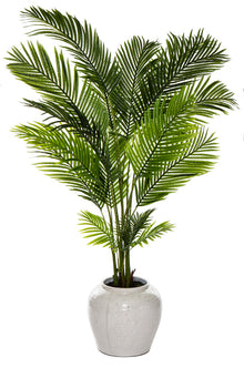 Areca Palm in Hunter Planter Large