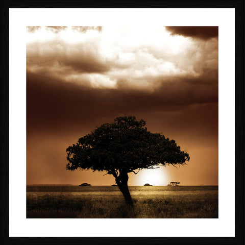 Acacia Photographic Framed Print
