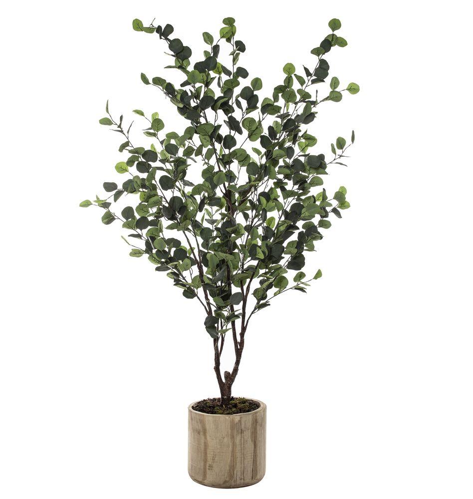 Eucalyptus Tree in Dansk Cylinder Pot 180cmH