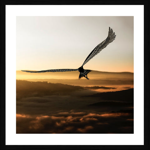 Eagle Hawk Photographic Framed Print