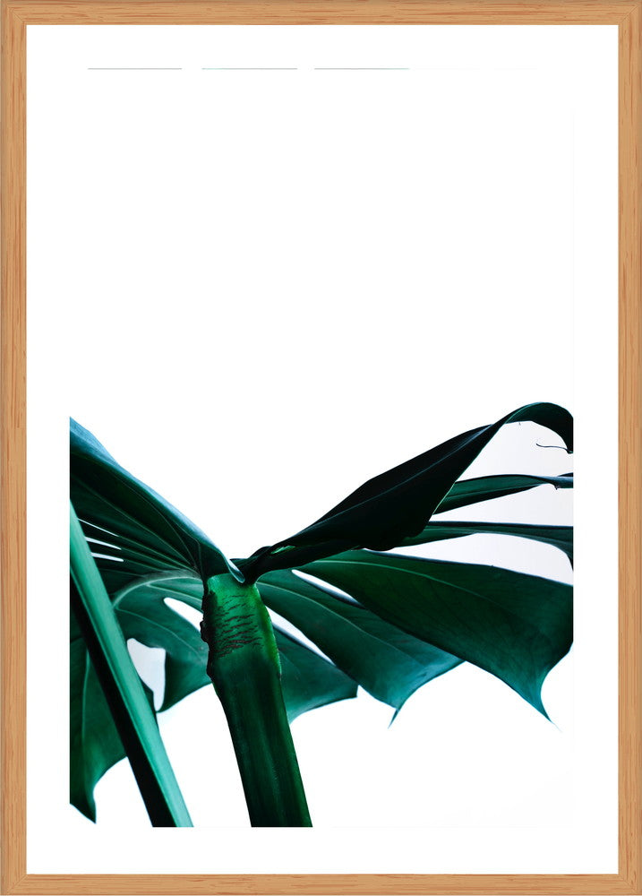 Green Palm 2 Photographic Print with Frame