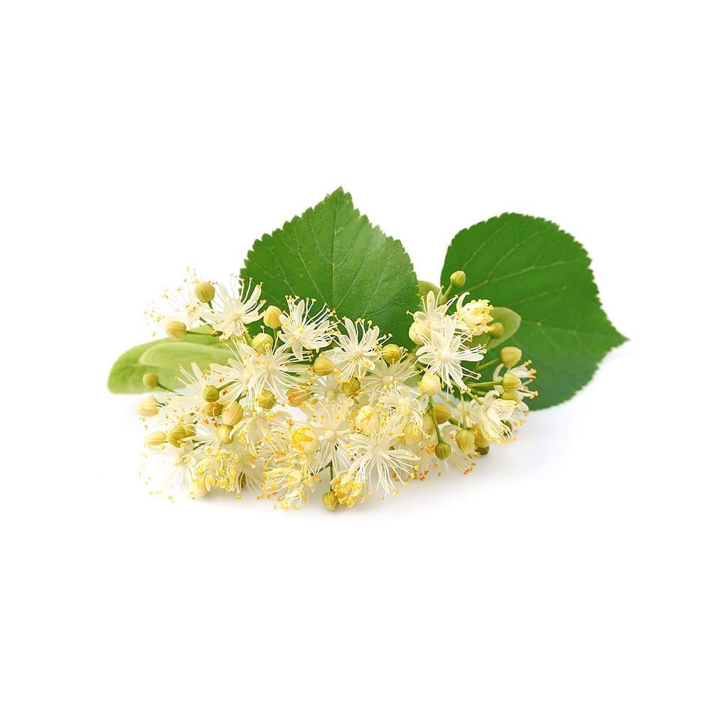 Linden (Tilia cordata) Dried Leaves and Flowers 50g 1.76oz | Biokoma.com