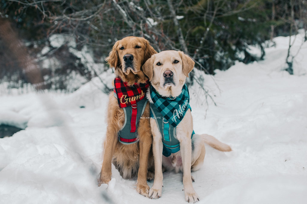 Two dogs in the snow. How to take awesome instagram pics of your dog. Blog post by Hana Kim from @mycaninelife for Clive and Bacon