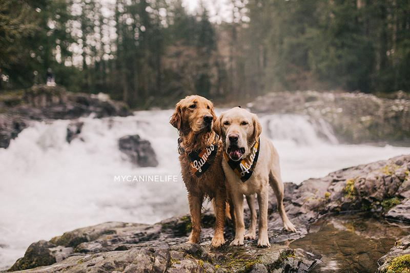 Two dogs in front of a waterfall. How to take awesome instagram pics of your dog. Blog post by Hana Kim from @mycaninelife for Clive and Bacon