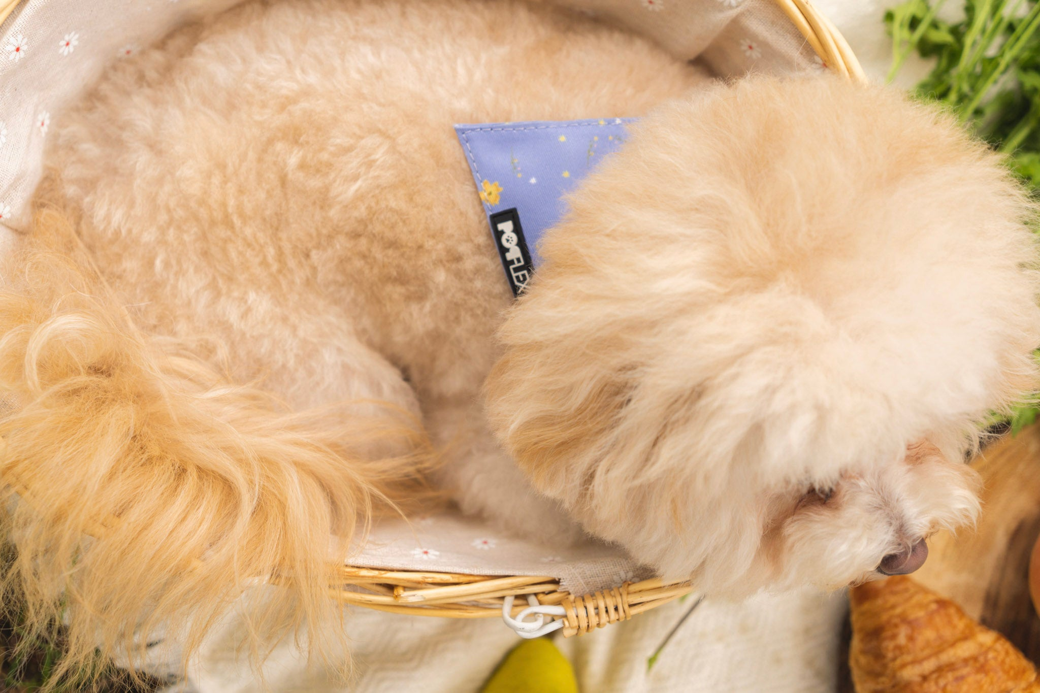 a cute dog wears cute activewear! POPFLEX bandanas and pet accessories from the cottagecore collection