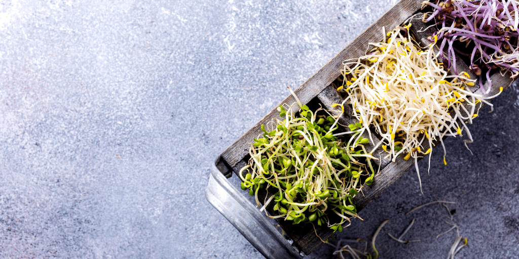 How To Grow Your Own Salad Sprouts at Home!