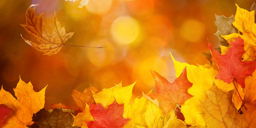 How to take care of your skin in the Autumn Evolve Organic Beauty