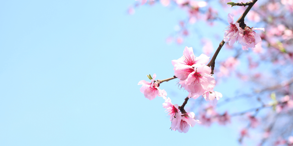 How Springtime Allergies Affect the Skin Evolve Organic Beauty