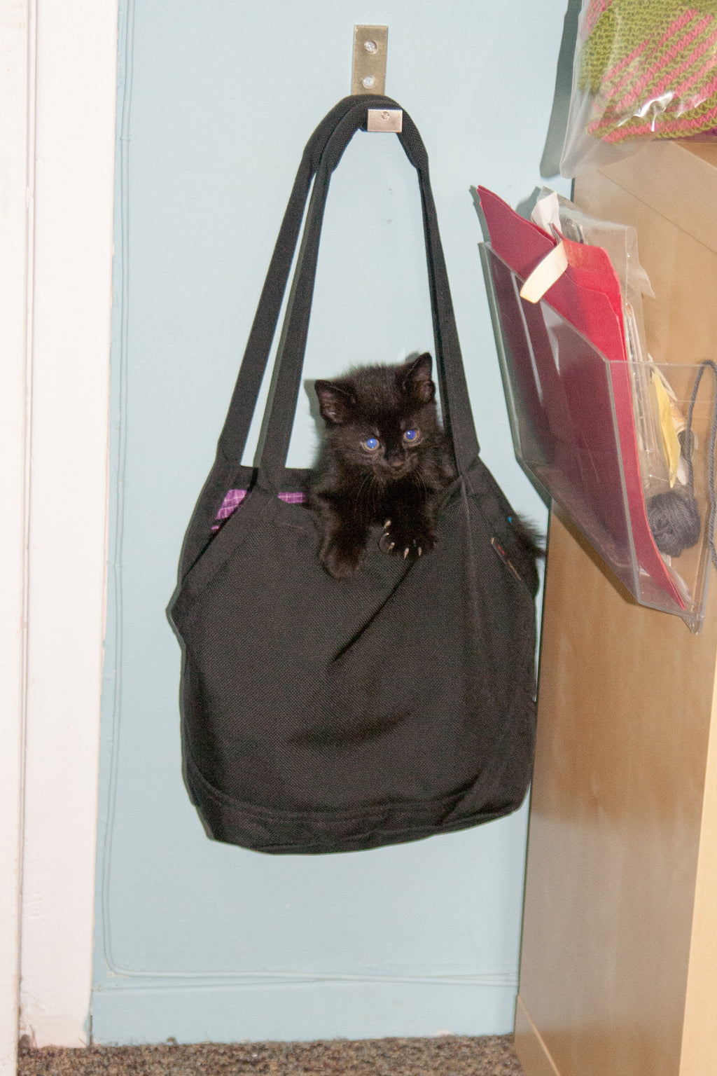 Kitten in The Little Swift | TOM BIHN