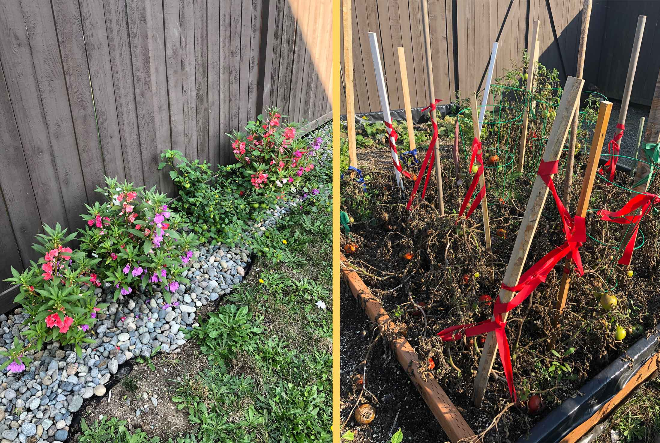 Irma's plants. Notice the selvedge from work used as ties on stakes!