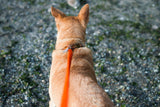 The Bungee Dog Leash attached to a dog's collar.