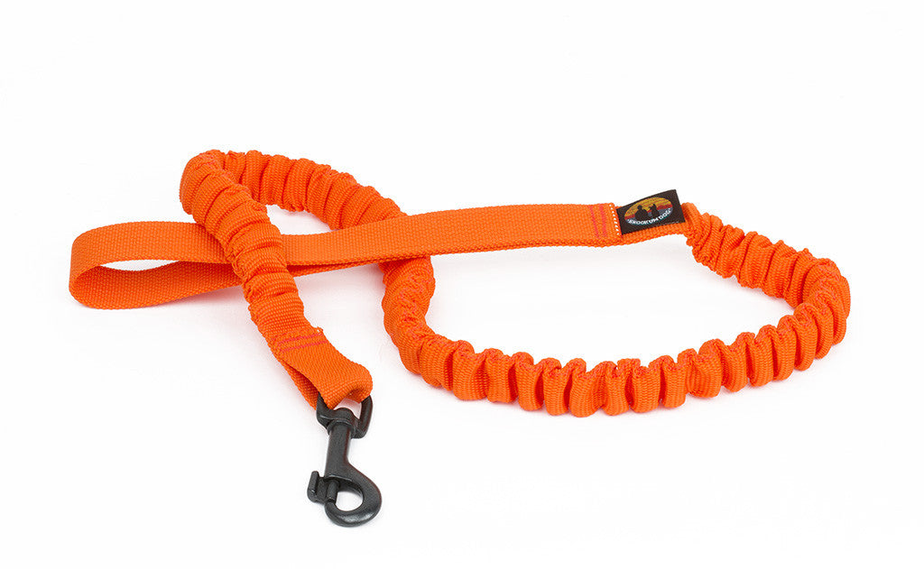 The Bungee Dog Leash in Orange.