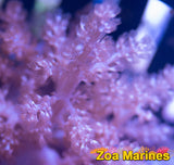 Pinkish Kenyan Finger Coral, Good Starter, Fast Growth (no. SOFT2)