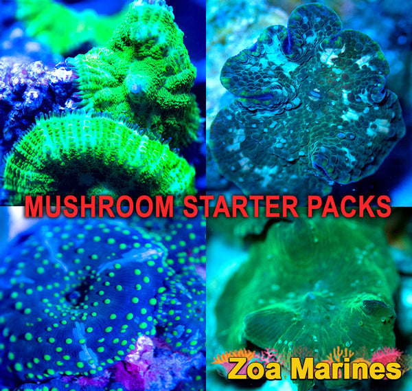 Mushroom Bargain Starter Packs x4 Shrooms