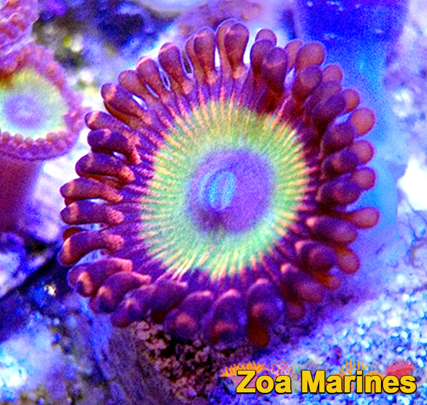 Collectors Zoa 'Bowser' 1 Head