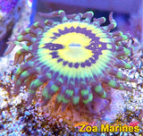 Zoa 'Pacman/ButtKisser' Single Head.