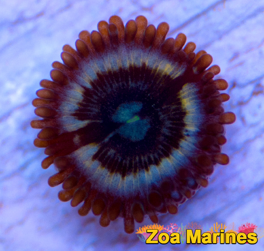 Collectors Zoa 'Petroglyph' 1 Head