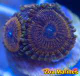 Epic Collectors Zoa 'Sikh Warriors' Various Sizes.